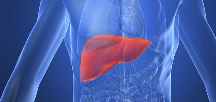 omeopatia-salute-curare-il-fegato
