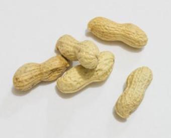 omeopatia-salute-arachidi
