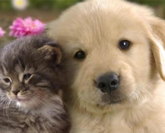 omeopatia-salute-cuccioli-e-allergie