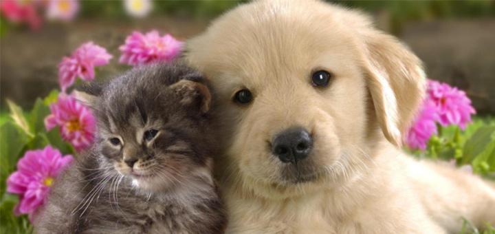 Famoso Anche cani e gatti soffrono di allergie - Omeopatiasalute FA11