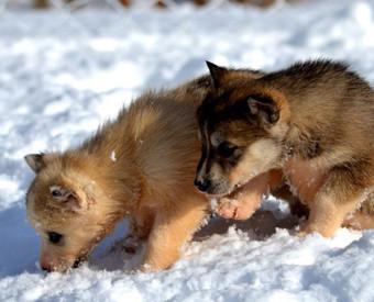 omeopatia-salute-cuccioli-e-freddo